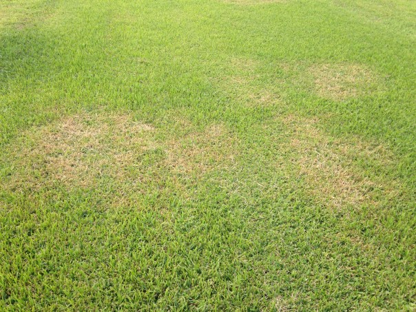 Brown Patch Nov 05, 2 17 52 PM