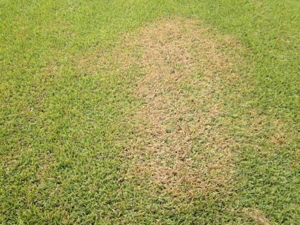 Brown Patch Nov 05, 2 18 10 PM